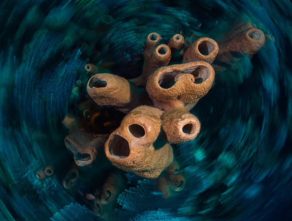 Long Exposure Shot of Sponges