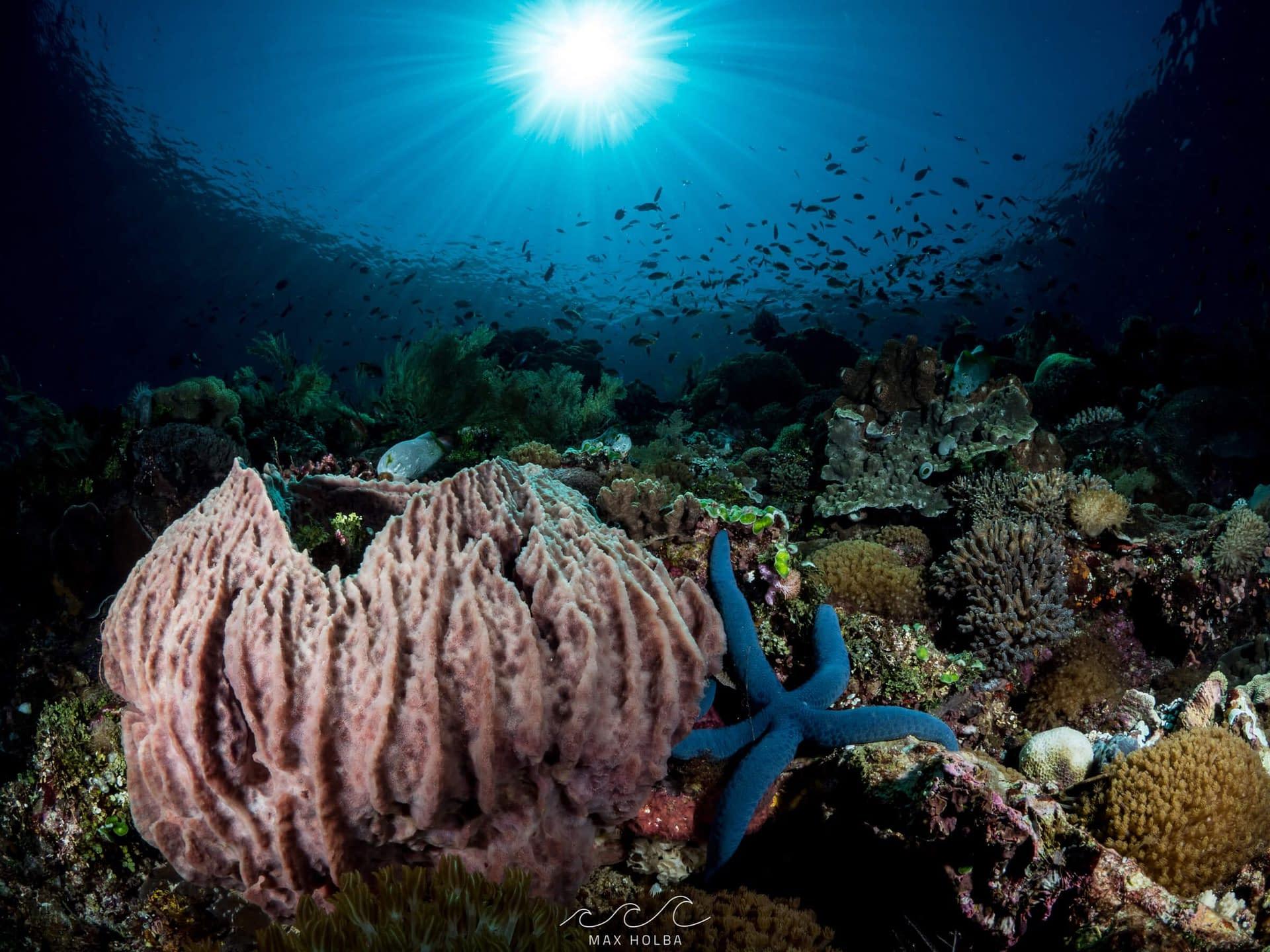 Sunball Reefscape Max Holba