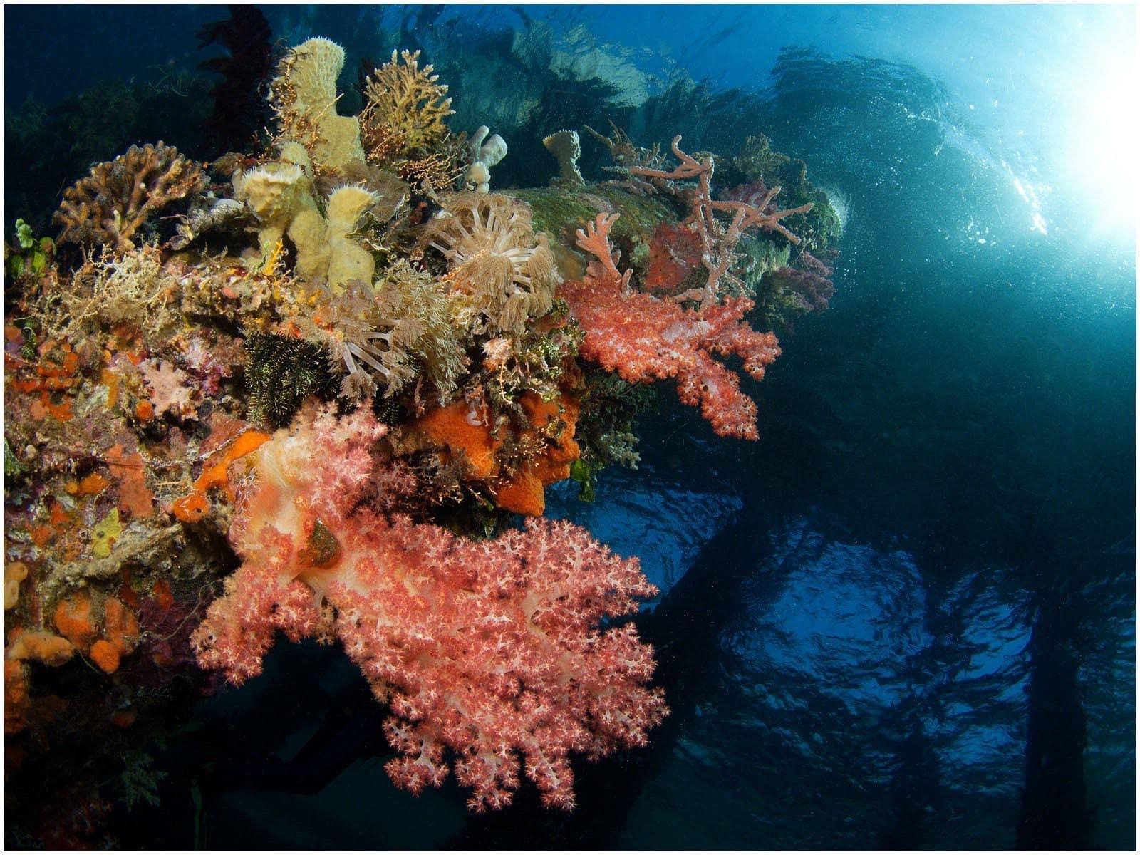 Bakalang Pier Underwater, Alor