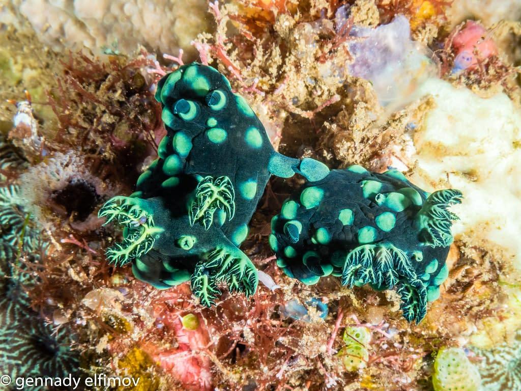 Guest Gallery Image - Gennady Elfimov - Alami Alor Dive Resort