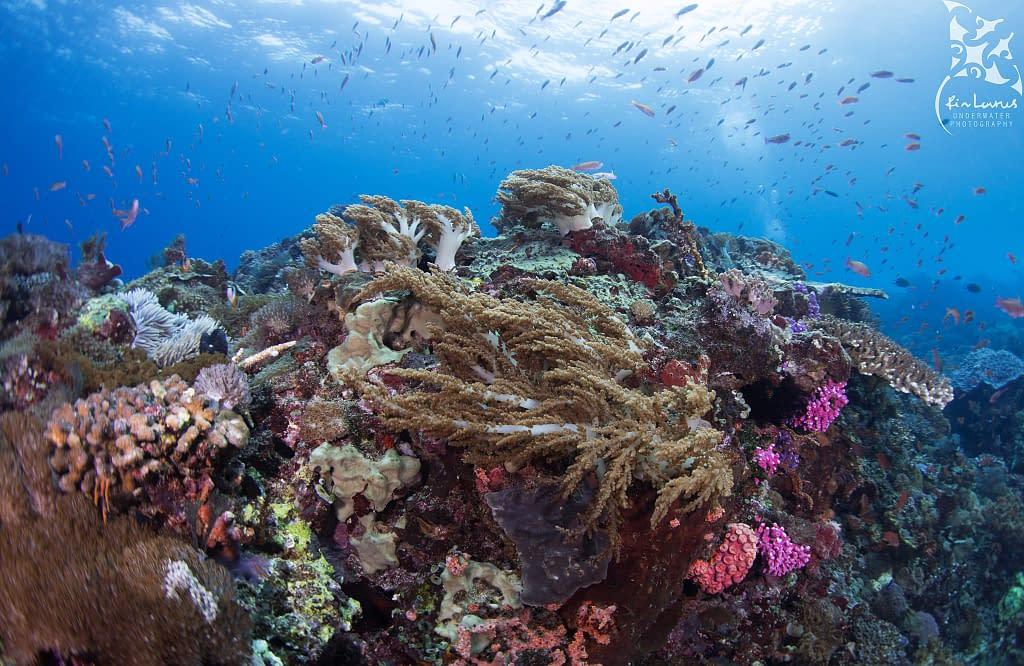 Underwater Reef Scenery Alor
