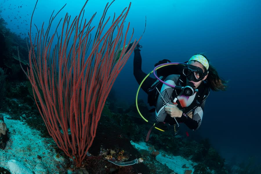 Diver looking at hard coral