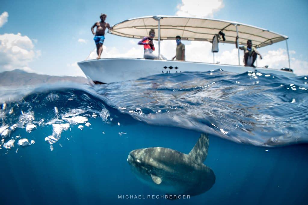 Mola Mola Sunfish under Alami Alor Speed Boat - Michael Rechberger
